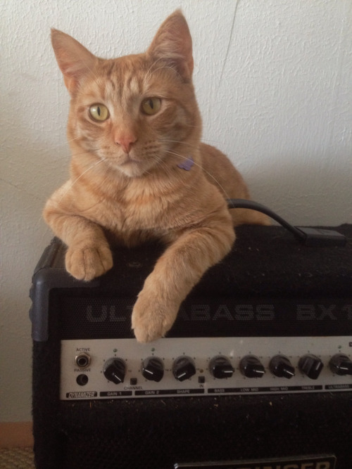 The Greatest Single Thing on the Internet Today….Cats on Amps!